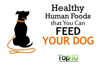 10 Healthy Human Foods that You Can Feed Your Dog