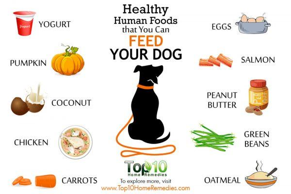 healthy human foods that you can feed your dog