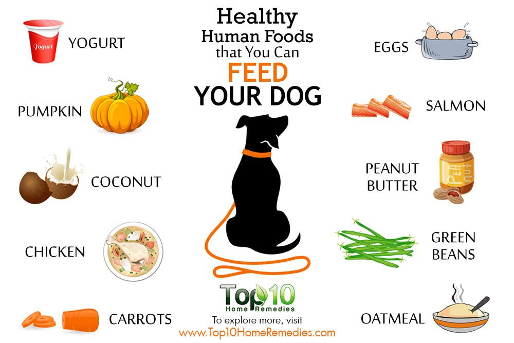 Safe Human Foods As Treats For Dog