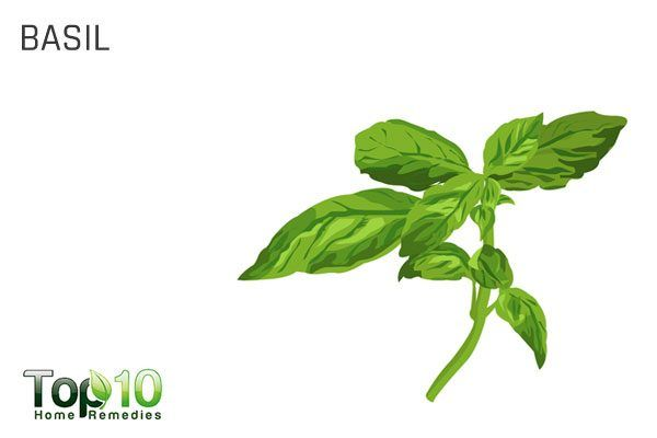 holy basil for health