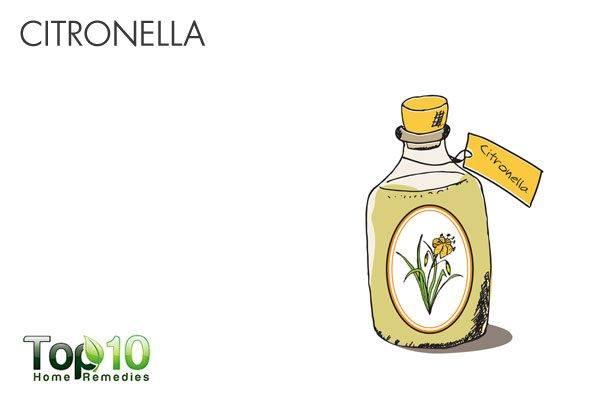 citronella oil as natural mosquito repellent