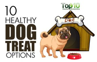 10 Healthy Dog Treat Options