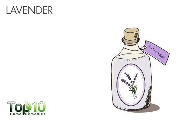 lavender oil as natural mosquito repellent