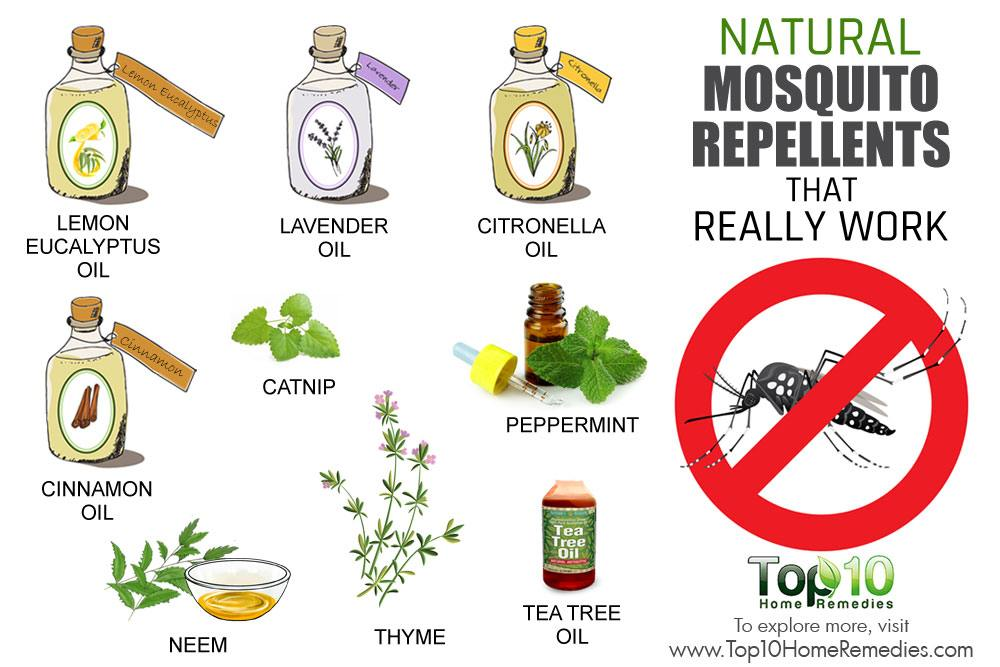 Mosquito Remedies During Pregnancy
