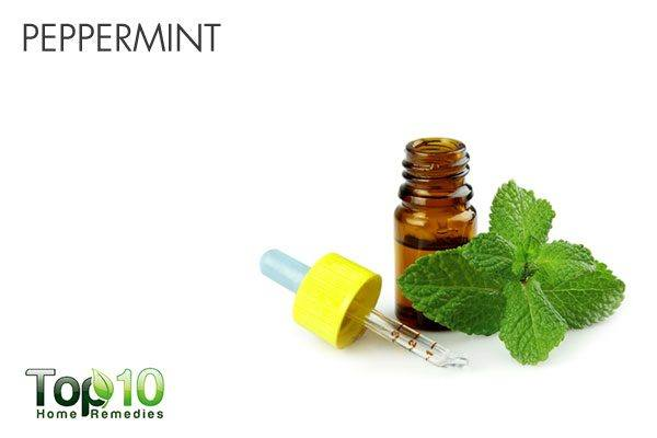 peppermint as natural mosquito repellent