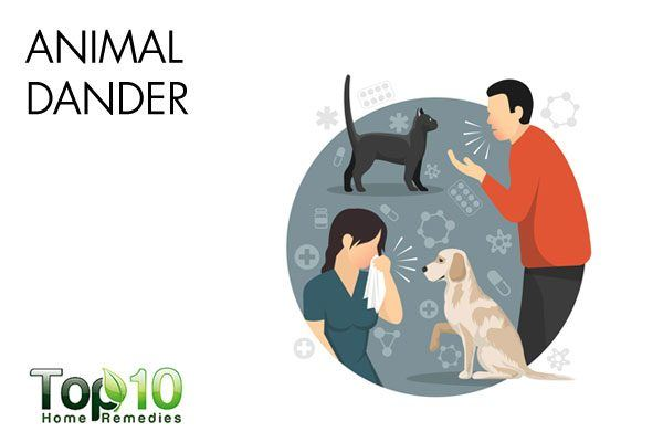 animal dander can trigger allergy