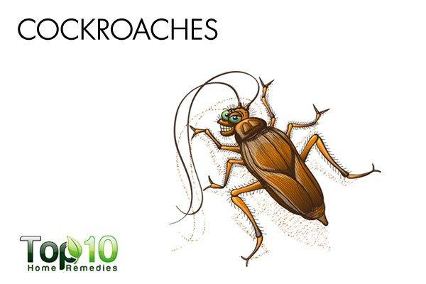 cockroaches can cause allergic reaction