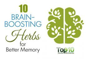 10 Brain-Boosting Herbs for Better Memory