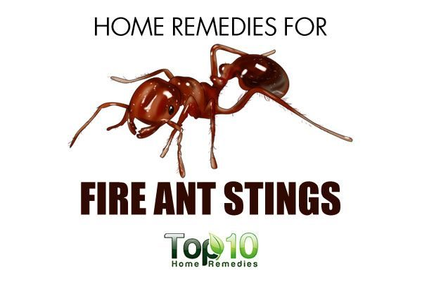 ... Home Remedies For Ant Stings Top 10 Home Remedies ...