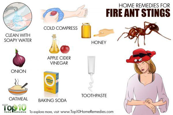 home remedies for fire ant stings