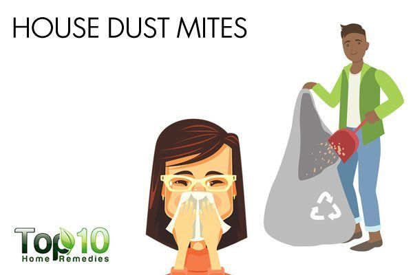 house dust mites may cause allergy