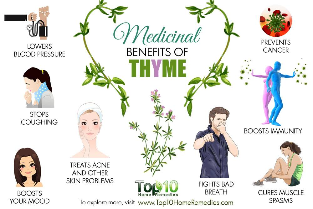 10 Medicinal Benefits Of Thyme Top 10 Home Remedies