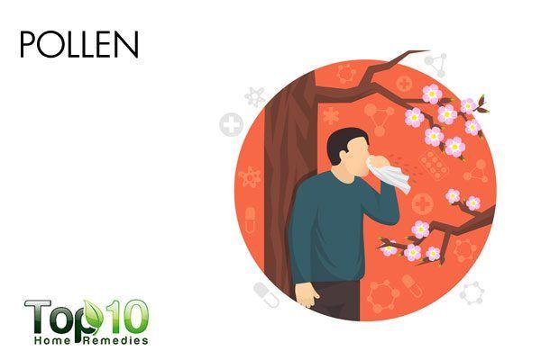pollen can trigger allergy
