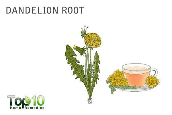dandelion root tea to increase urine output