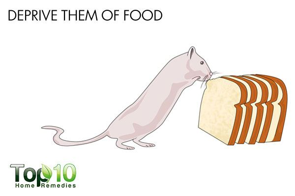 How to Get Rid of Mice   Top 10 Home Remedies
