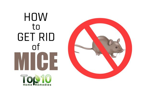 how to get rid of mice quickly and efficiently