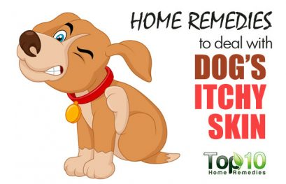 Home Remedies to Deal with Your Dog's Itchy Skin