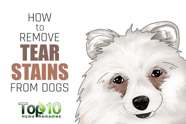 Natural Way To Get Rid Of Tear Stains On Dogs
