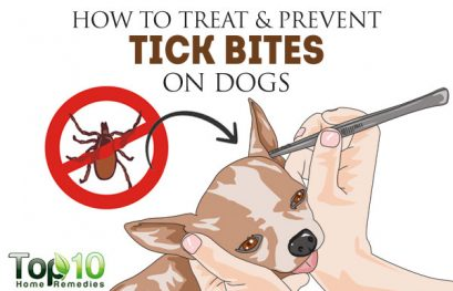 How to Treat and Prevent Tick Bites on Dogs