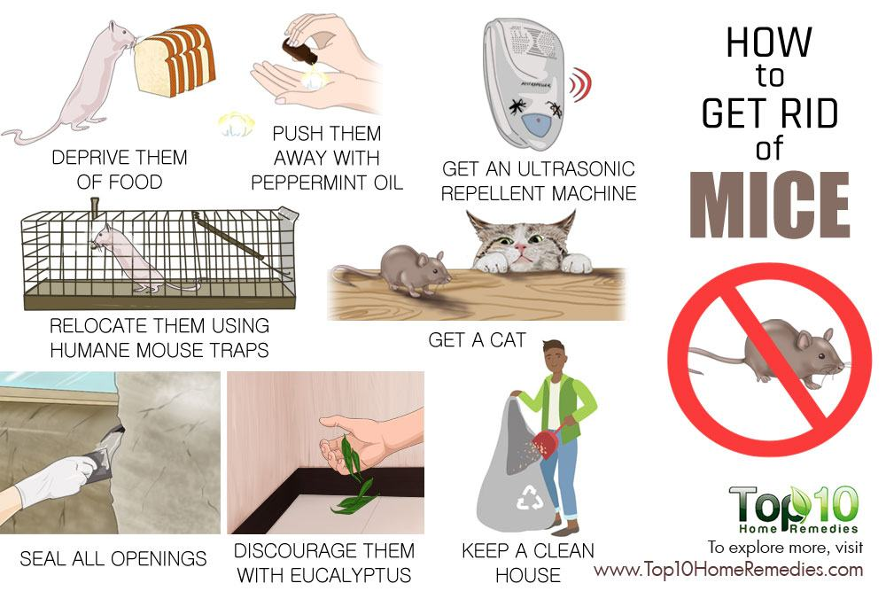 Natural Remedies To Get Rid Of Mice
