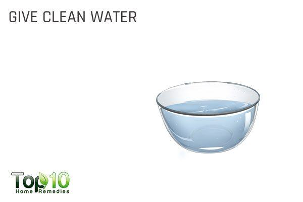 provide clean drinking water to your dog