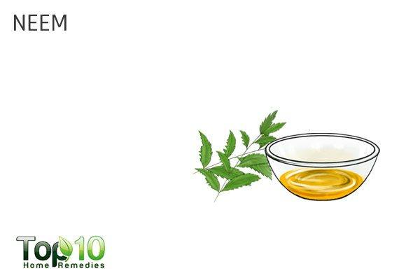 neem for dog's itchy skin