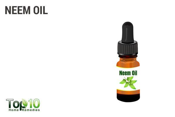 neem oil to kill ticks