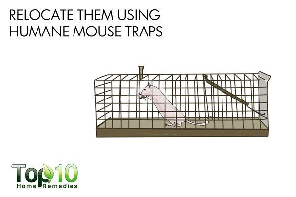 use humane mouse traps
