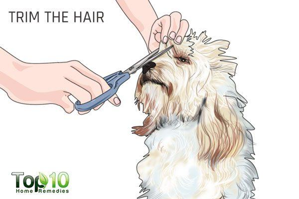 trim your dog's hair around the eyes
