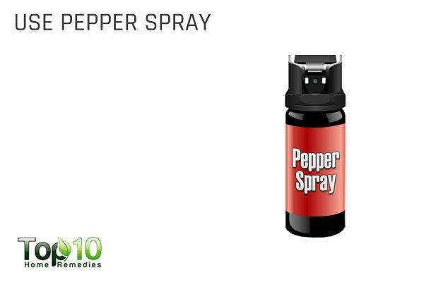 use pepper spray to keep lizards at bay
