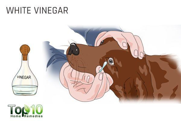 use white vinegar to treat dog tearstains
