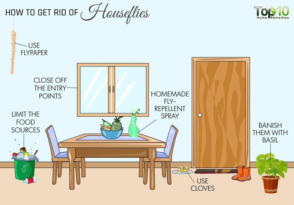 how to get rid of flies in your house houseflies top