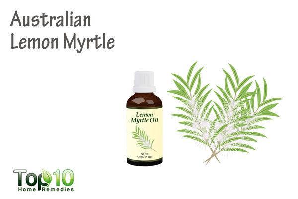 Australian lemon myrtle for molluscum contagiosum