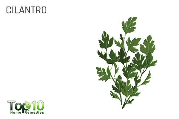 cilantro to detoxify your body