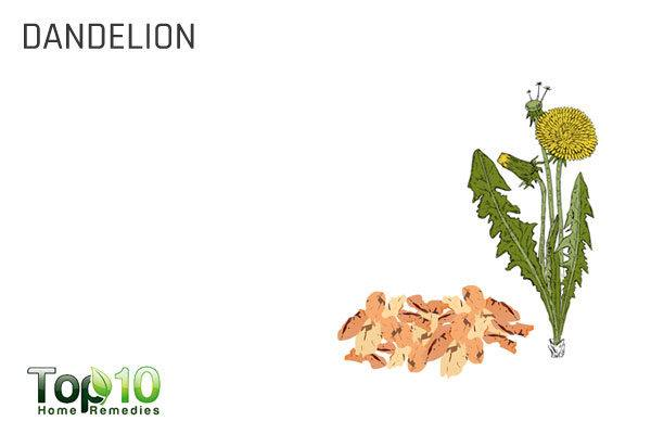 dandelion for detox