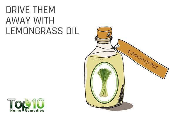 drive flies away with lemongrass oil