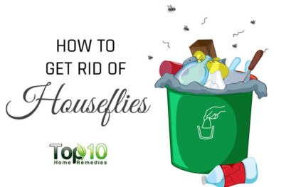 How to Get Rid of Flies in Your House (Houseflies)