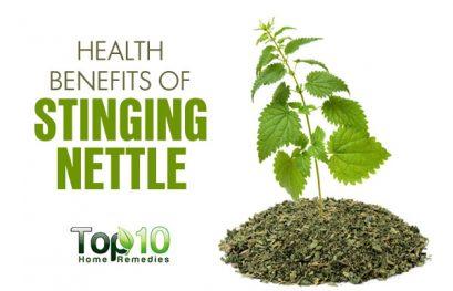10 Health Benefits of Stinging Nettle