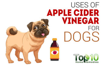 Top 10 Uses of Apple Cider Vinegar for Dogs