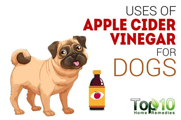 Top 10 Uses of Apple Cider Vinegar for Dogs | Top 10 Home