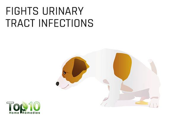 Best Dog Food For Urinary Tract Infections