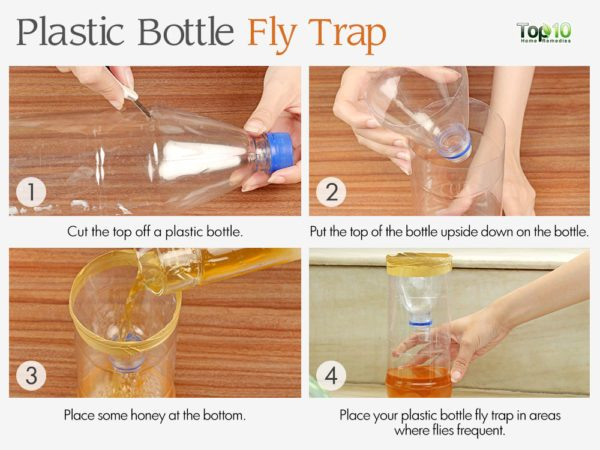 How to get rid of flies in your house houseflies top for How to cut the bottom off a wine bottle easily