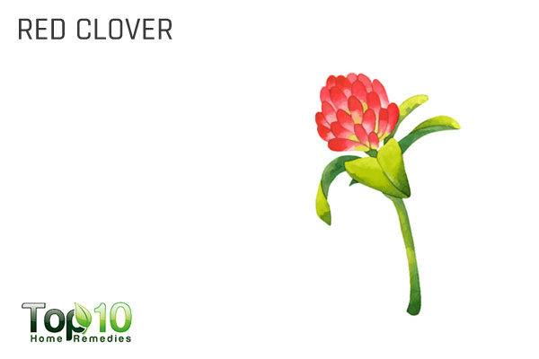 red clover to detoxify your body