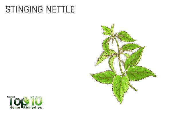 stinging nettle to get rid of toxins