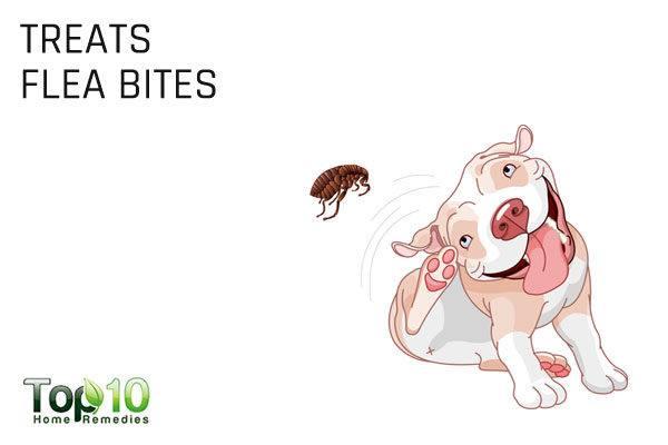 apple cider treats flea bites