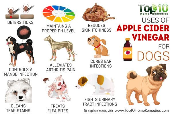 best uses of apple cider vinegar for dogs