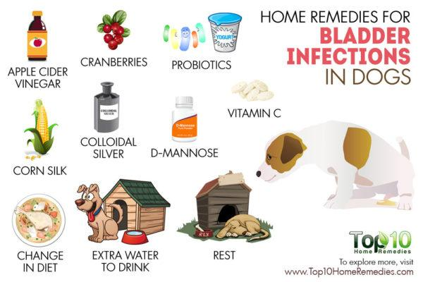 home remedies for bladder infection in dogs
