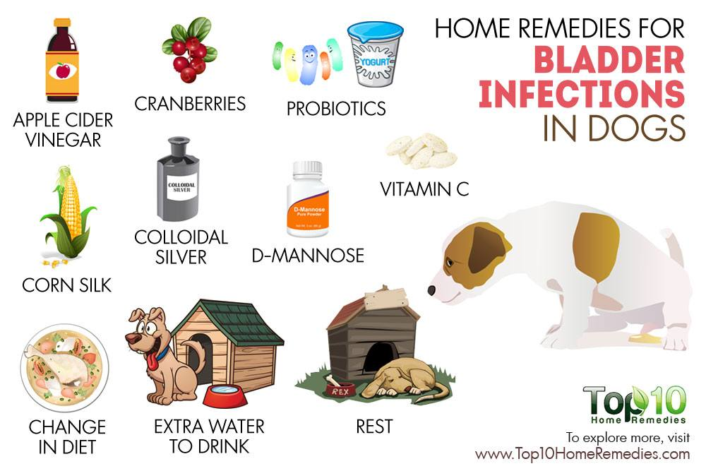 Home Remedies To Treat Bladder Infection In Dogs