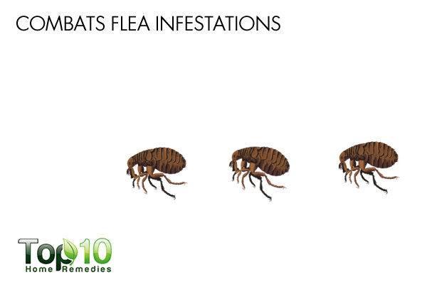 diatomaceous earth repels fleas