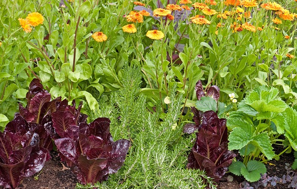 Home Remedies To Control Garden Pests Page 2 Of 3 Top